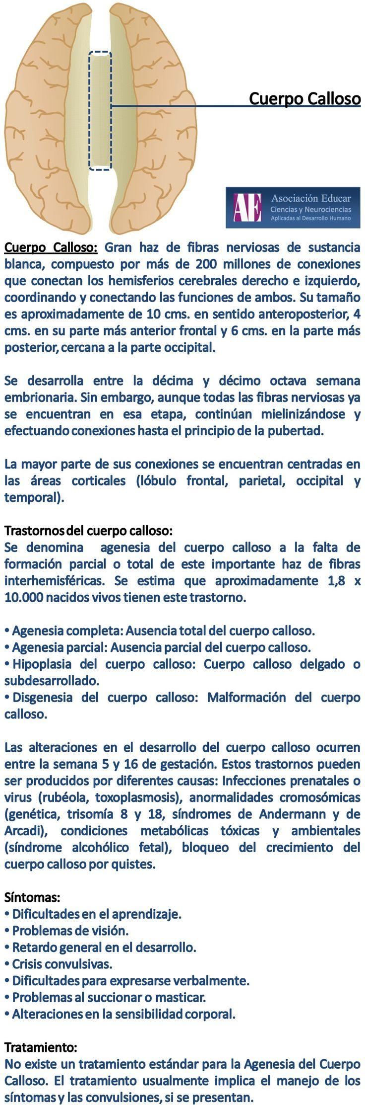 Cuerpo Calloso - Asociación Educar - Ciencias y Neurociencias aplicadas al Desarrollo Humano - www.asociacioneducar.com