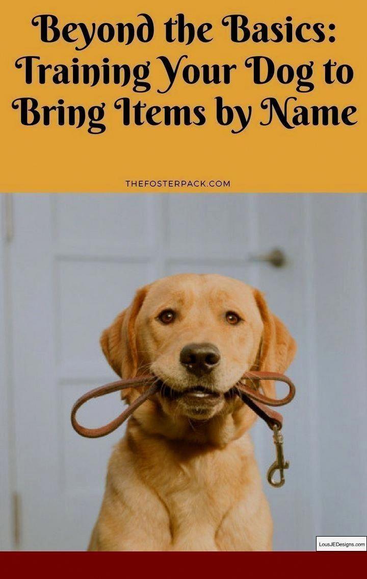Bark control training your dog dog training obedience