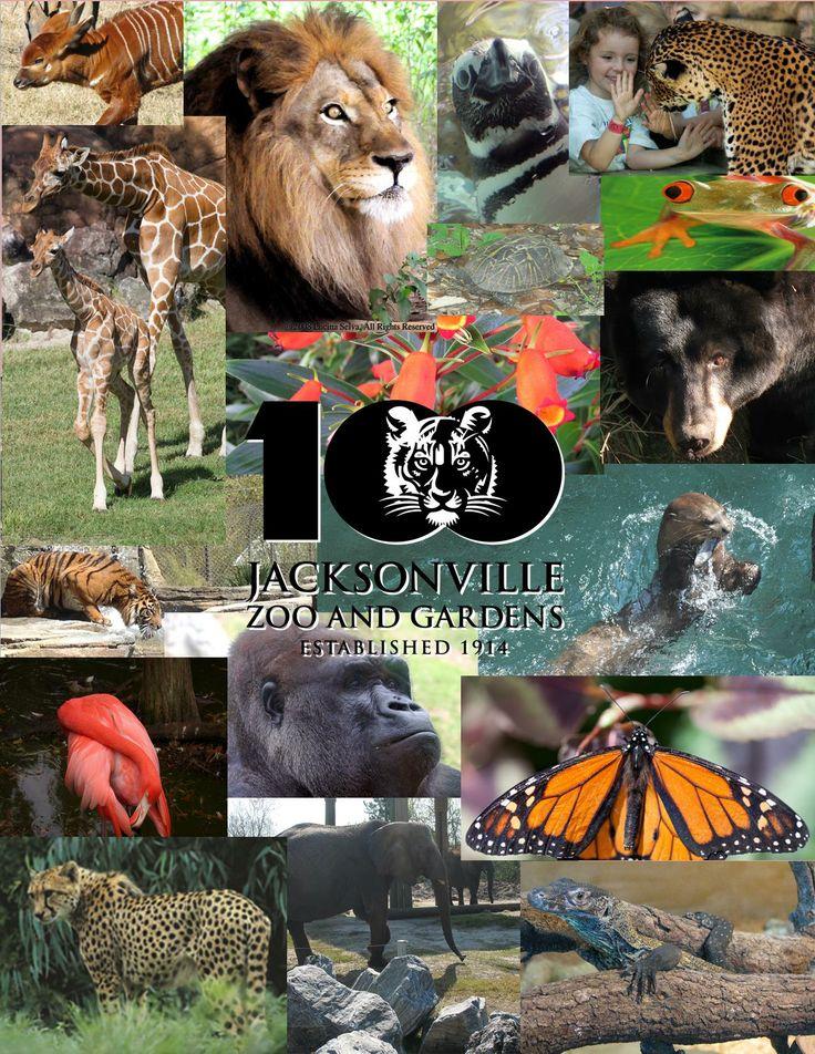 Tennessee Aquarium Blog: Penguin Parties at the Tennessee ... |Happy Feet Zoo Aquarium
