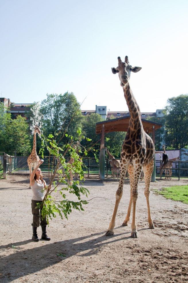 Selvaggi si nasce su DeASapere HD:   Roberta Castiglioni con una giraffa