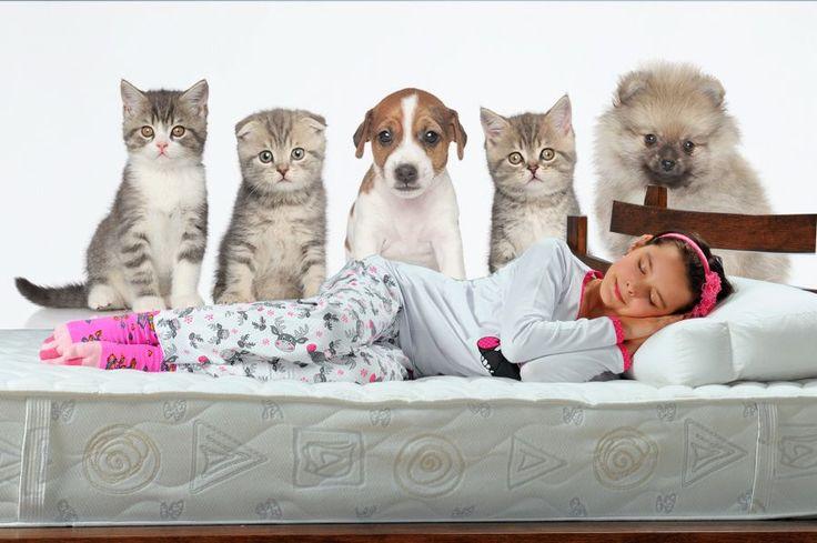 Fototapeta z kotkami i psiakami  http://ecoformat.com.pl/fototapeta-dla-ucznia/