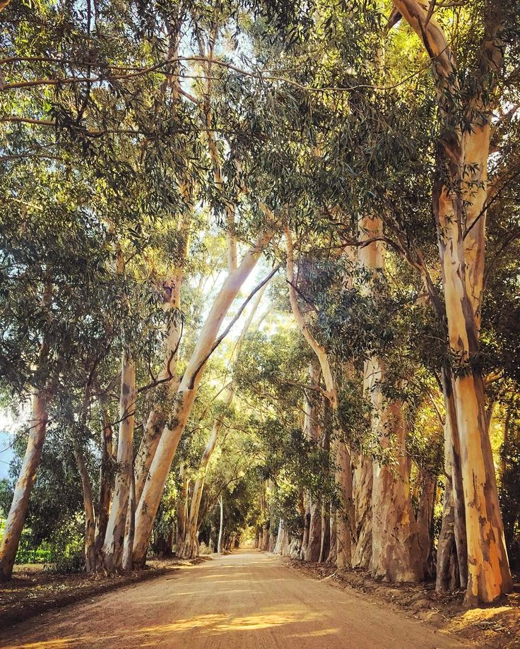 Tree-lined backroad (Paarl, South Africa) by Murray Mitchell (@murraym) on Instagram
