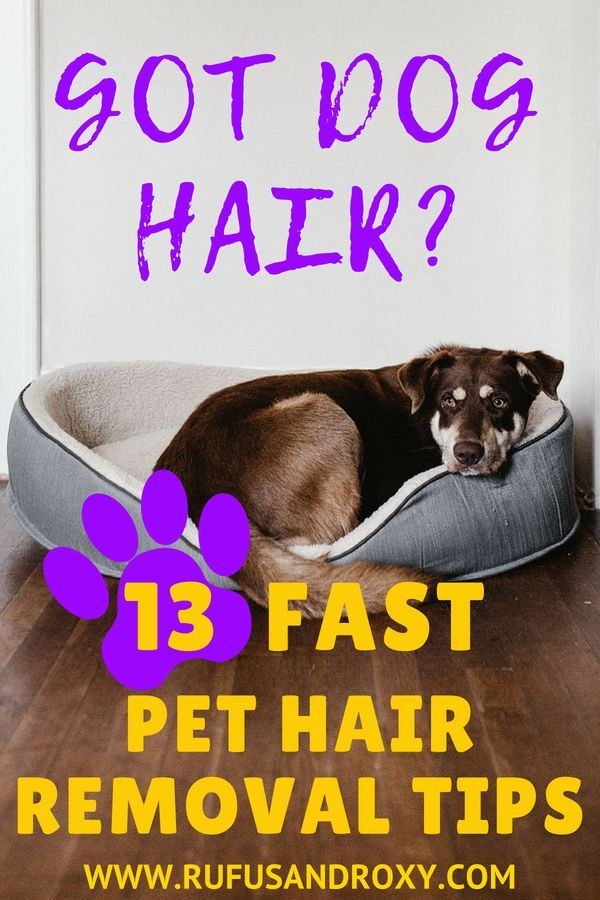 13 Quick Pet Hair Removal Hacks Pet Hair Removal Dog Hair Removal Dog Hair