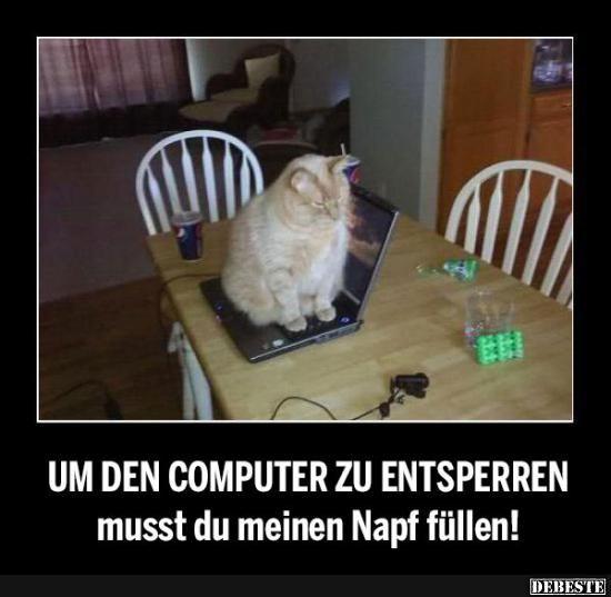 Um den Computer zu entsperren musst du meinen Napf füllen! | Lustige Bilder, Sprüche, Witze, echt lustig