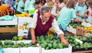 Mogán reparte vitamina verde en la segunda edición de la Feria del Aguacate.