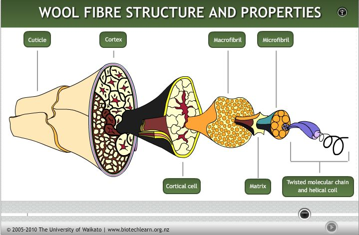 This interactive shows the cellular structure of wool fibre and how this relates to its properties.