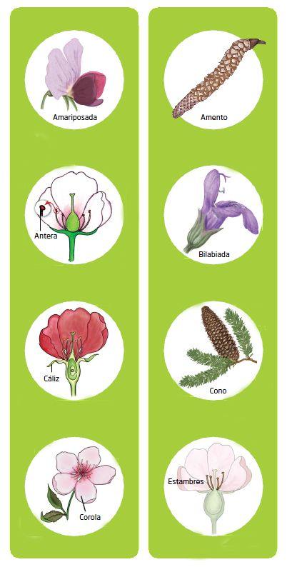 Flores y conos 1