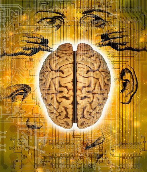 Mózg jak plastelina