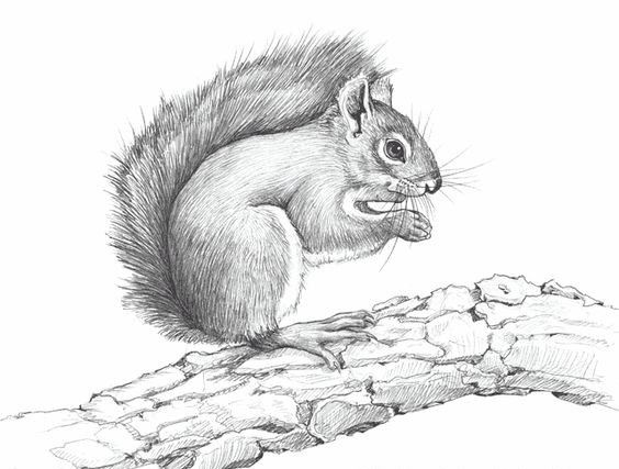 Grey pencil work squirrel sitting on thick tree branch tattoo design