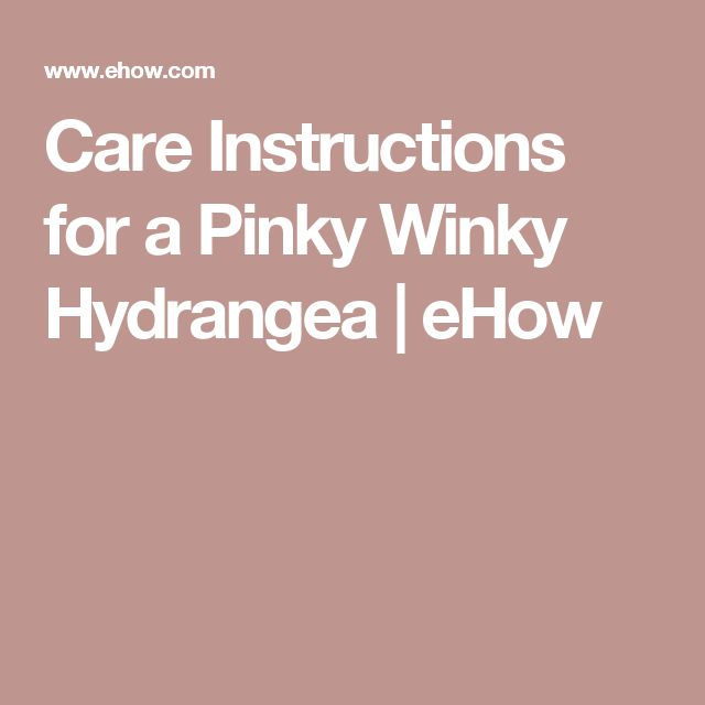 Care Instructions for a Pinky Winky Hydrangea   eHow