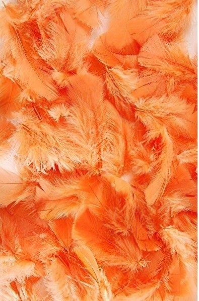 Plumes Couleur Abricot