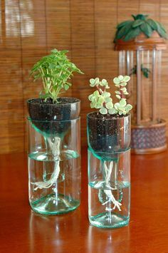 Botellas-de-vidrio-macetas-DIY-cut-bottle-plants