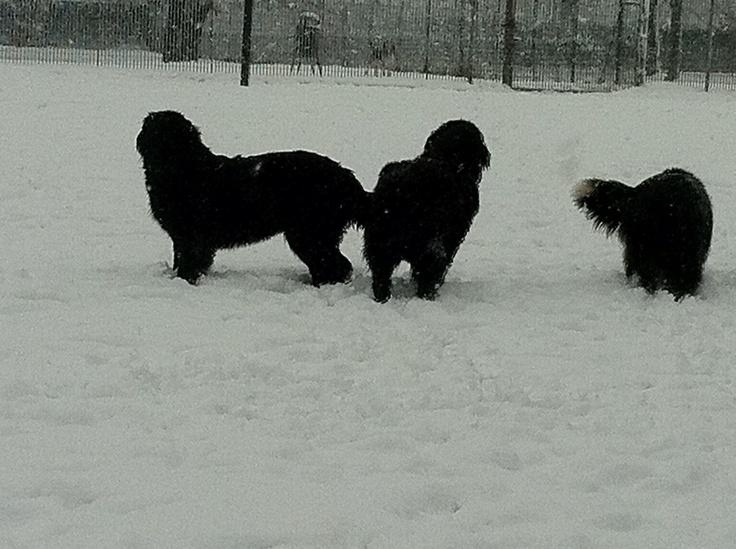 Nanà Wendy e Tricky sulla neve feb 2012