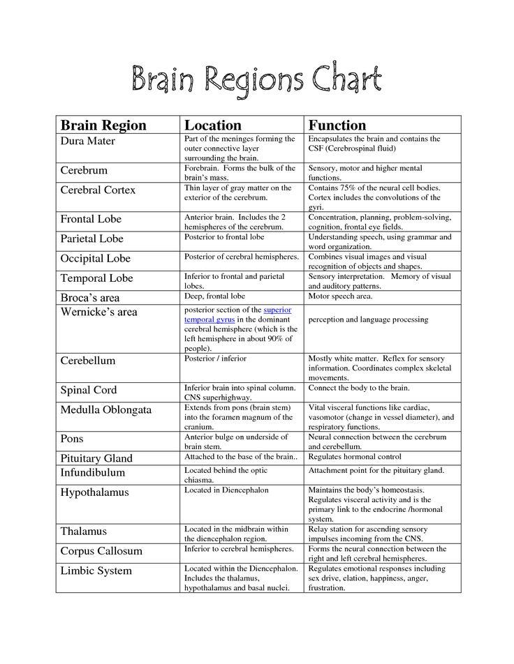 brain functions chart | Brain Parts -