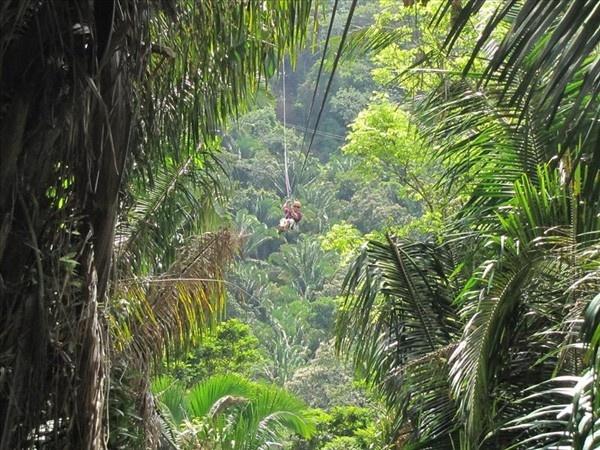 Zip lines in the jungles of Belize