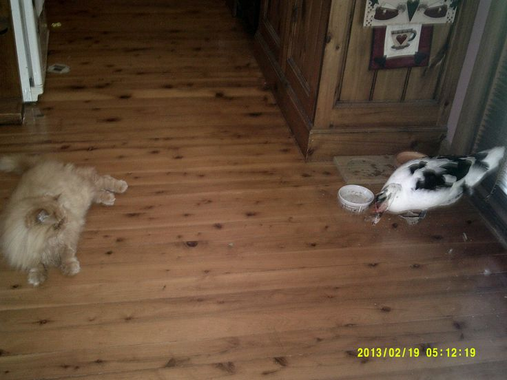 Brandy letting Bella the duck have a snack!