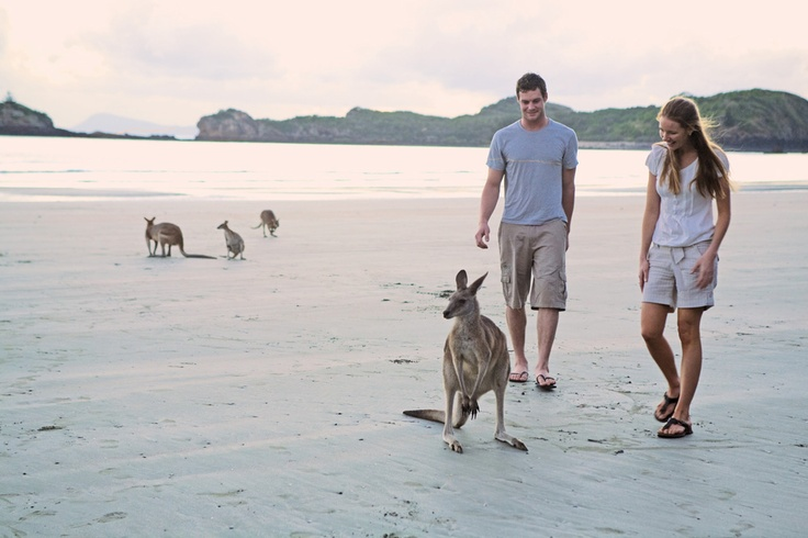 Hop with the kangaroos at Cape Hillsborough National Park #mackay #kangaroo #nature #travel #nationalpark