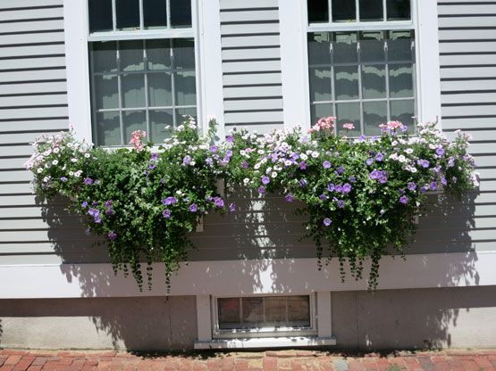 8.12.13: Nantucket for a long weekend | NYSD more charming window boxes
