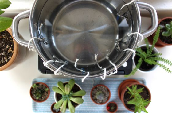 How to create a DIY self-watering system for houseplants - use this the next you go on vacation! | Scissors & Sage