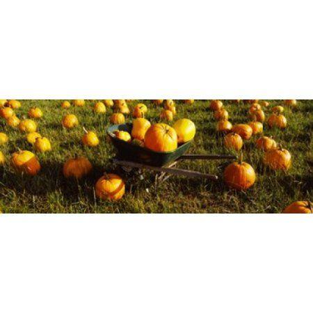 Wheelbarrow in Pumpkin Patch Half Moon Bay California USA Canvas Art - Panoramic Images (36 x 13)