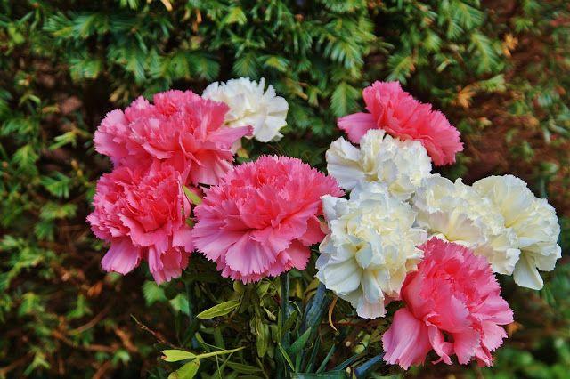 ΒΙΟσυντονίΖΩ - VIOsintoniZW : Το λουλούδι που αντιστοιχεί στο μήνα που γεννήθηκε...#Δημιουργία #ΠροσωπικήΑνάπτυξη #Στόχος #Ευεξία #ΒΙΟσυντονίΖΩ #ΒΙΟσυντονίΖΩVIOsintoniZW #Λουλούδια #Γαρύφαλλο #Βιολέτα #Νούφαρο #Μαργαρίτα #Κρινάκι #Τριαντάφυλλο #Δελφίνιο #Γλαδιόλα #Ζέρμπερα #Καλέντουλα ή #Κατιφές #Χρυσάνθεμο #Νάρκισσος