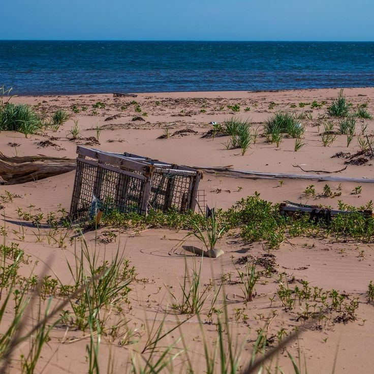 Sometime you will find something unique on the Sandy beach. #Canada #PEI #PEIphotographytour #summer #vacation #ocean
