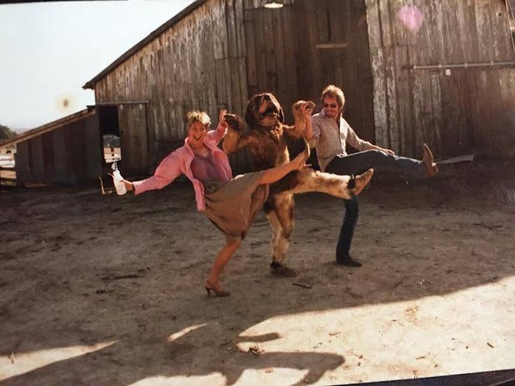 "Dee Wallace stunt double Gary Morgan and director Lewis Teague on the set of ""Cujo"" 1983 http://ift.tt/2nxMNPW #timBeta"