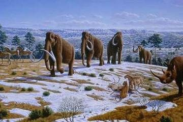 As a modern Floridian, it's kind of cool to think that early Floridians may have lived near mammoths and mastodons