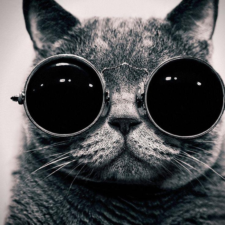 Cat With Sunglasses IPad Wallpaper HD.jpg 2,048×2,048