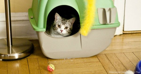 Show Your Cat Some Love With Proper Litter Box Maintenance! |  The Animal Rescue Site Blog