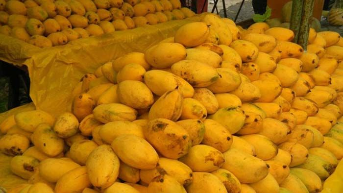 India Lost Mango Trade War Update:As per Economic Times, India has been on top of its game in mango production but disappointing exports of the fruit has enabled other countries like Pakistan, with much less production to beat India in the trade, according to the Centre for