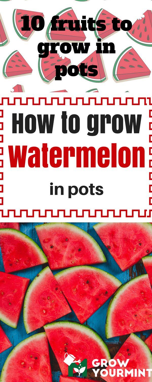 10 Fruits To Grow In Pots So That A Fresh Juice Is Always Close #fruit#garden#gardening#growyourmint.com