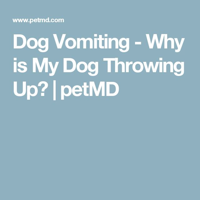 Dog Vomiting - Why is My Dog Throwing Up?   petMD