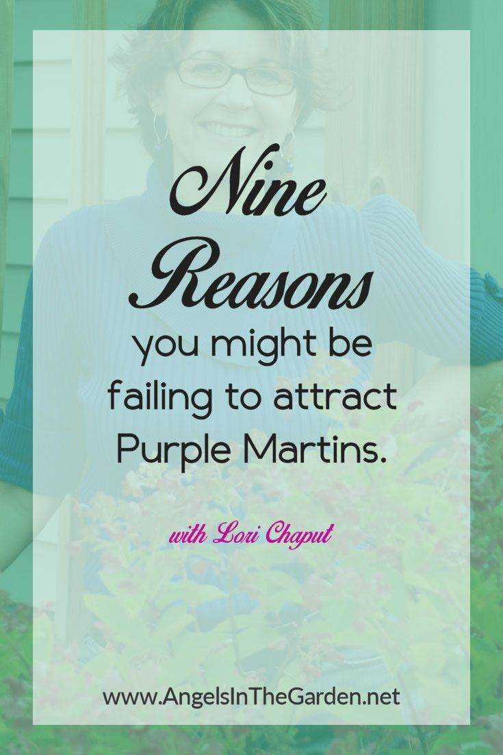 9 Reason's People Fail At Attracting Purple Martins 1. Purple Martin House That Is Placed Too Close To Tall Trees Or In Yards That Are Too Enclosed By Trees Or Shrubs Or Other Obstructions The MAIN reason people fail to attract Purple Martins is that they place their martin house in the wrong place and …