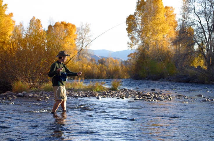 18 best images about fly fishing the provo river on for Trout fishing utah