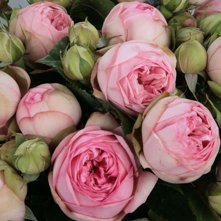 48 best Final Floral Reference images on Pinterest   Pink flowers ...