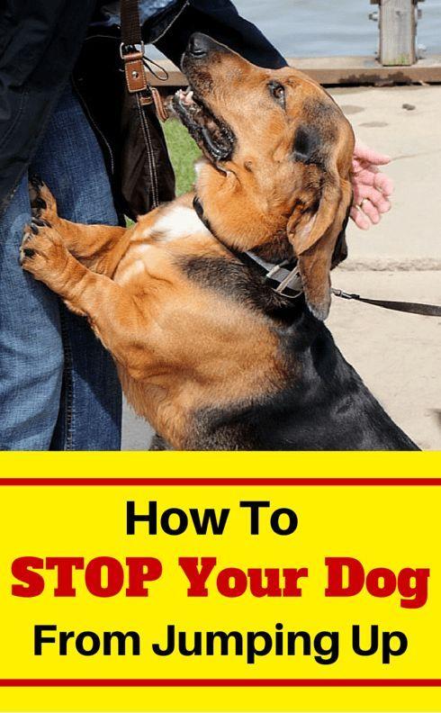 17 Best Ideas About Dog Training On Pinterest Dog