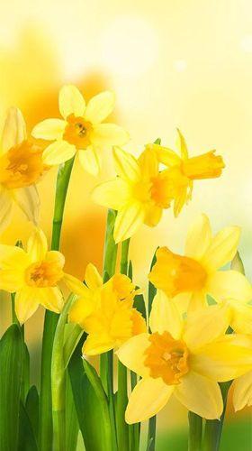 Геймплей Natural flowers для Android телефона.