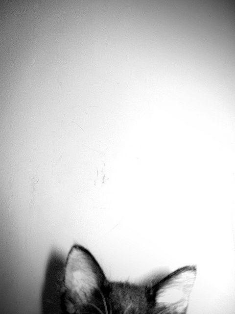 cat | ears