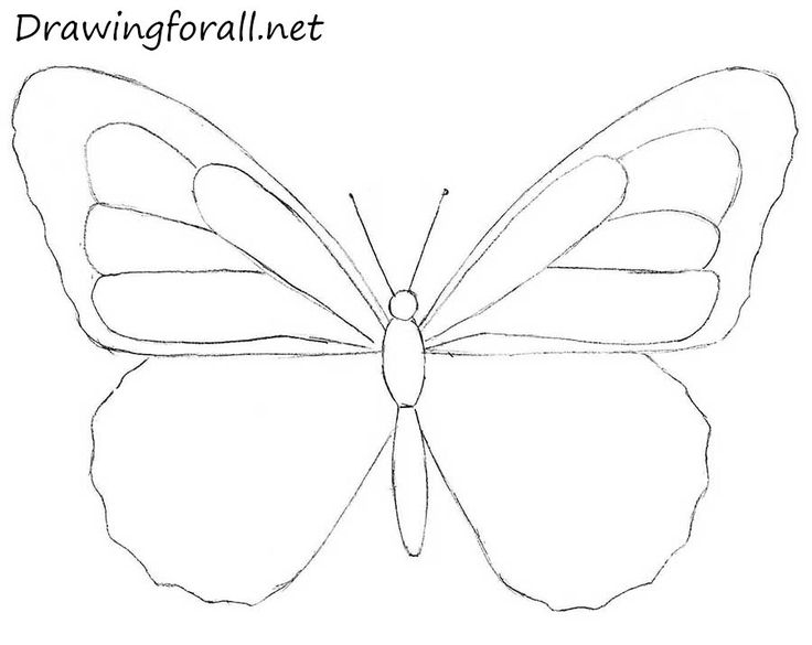 How To Draw A Butterfly For Beginners Drawing