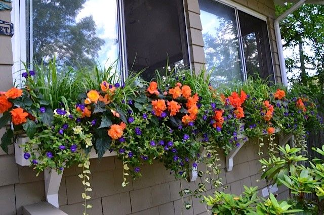 The Votes Are In! The Winners of the 2014 Window Box Contest Are…