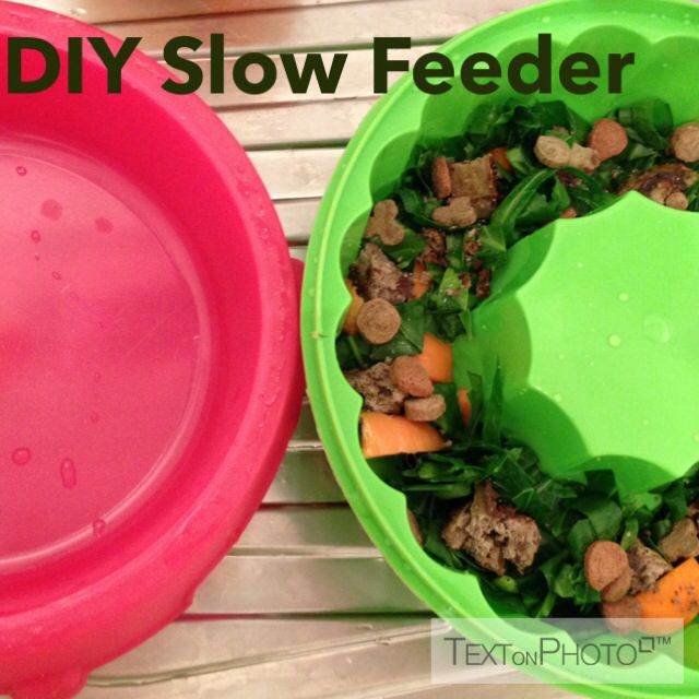 Diy Cat Slow Feeder