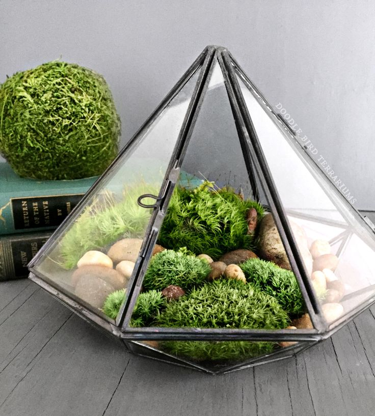Geometric Glass Diamond Terrarium with Plants by DoodleBirdie on Etsy https://www.etsy.com/listing/238855215/geometric-glass-diamond-terrarium-with