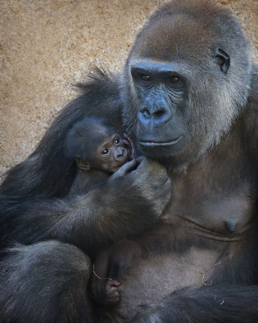 Imani with her Baby Girl at San Diego Zoo
