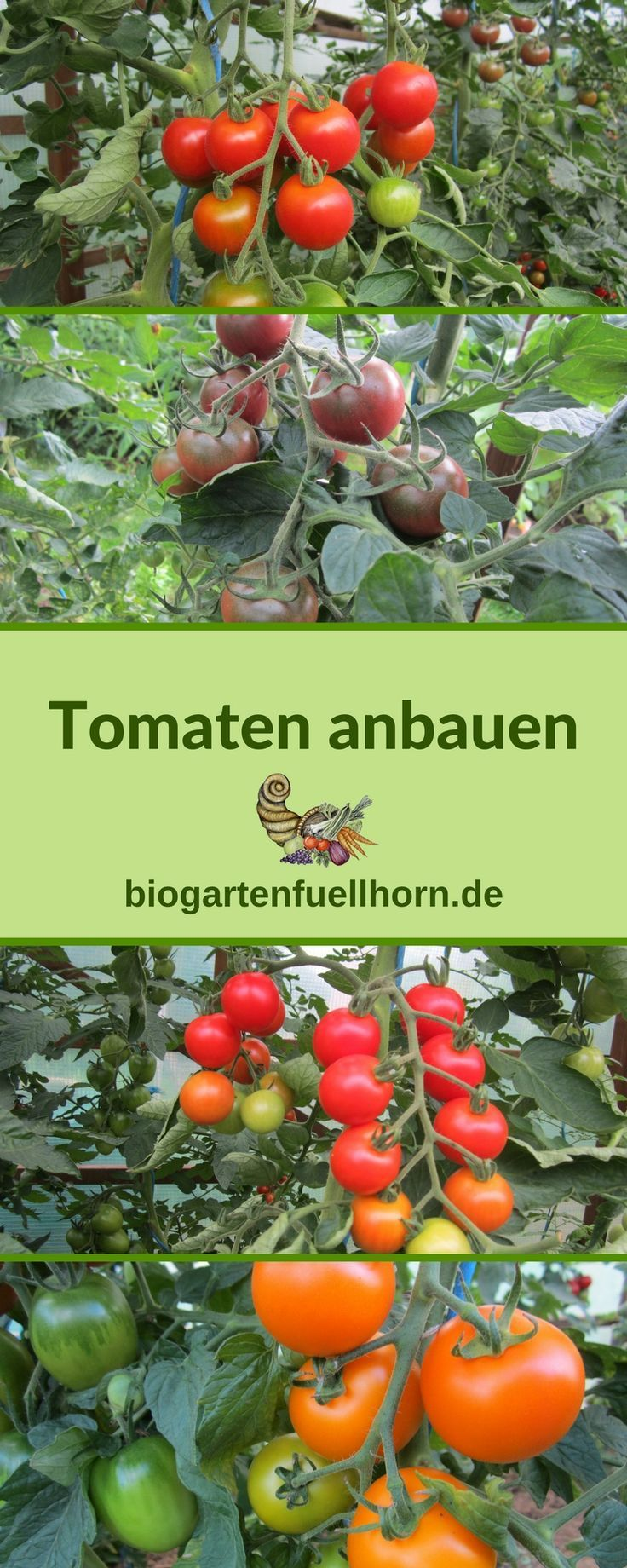Here You Will Learn How To Dress Your Own Tomatoes Tomatoes Grow Garden Ideas Tomaten Pflanzen Tomatenanzucht Tomaten Garten