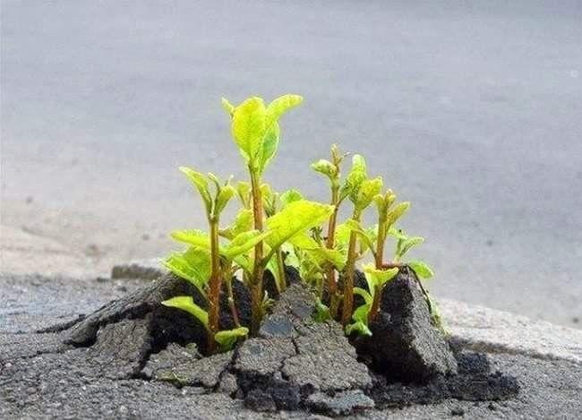 <<Если у вас есть мечта, желание и настойчивость – вы прорастете даже сквозь асфальт...>>