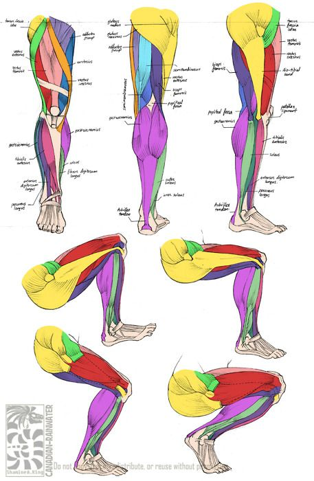 sippingonsujuice:  Anatomy - Leg Muscles by *canadian-rainwater So helpful <3