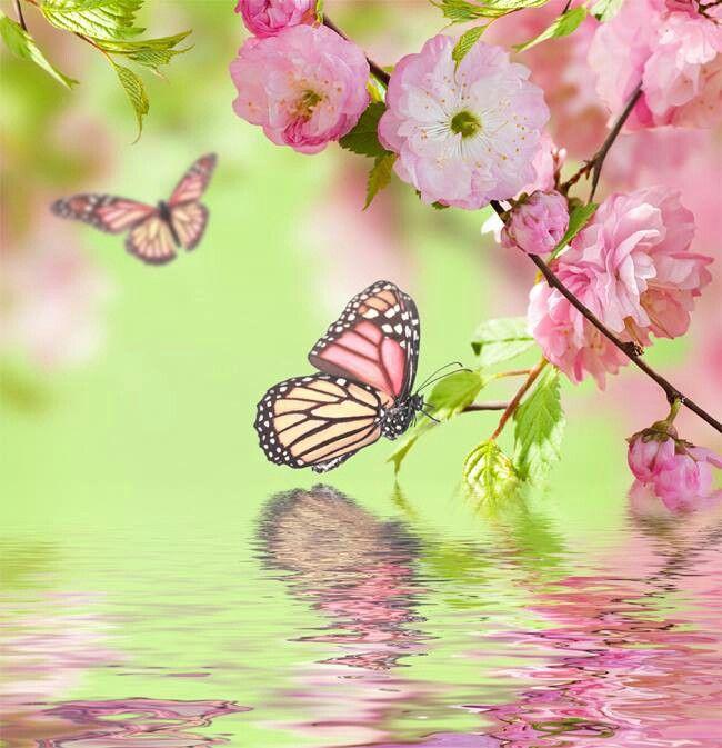 Soft Pink Flowers Butterflies
