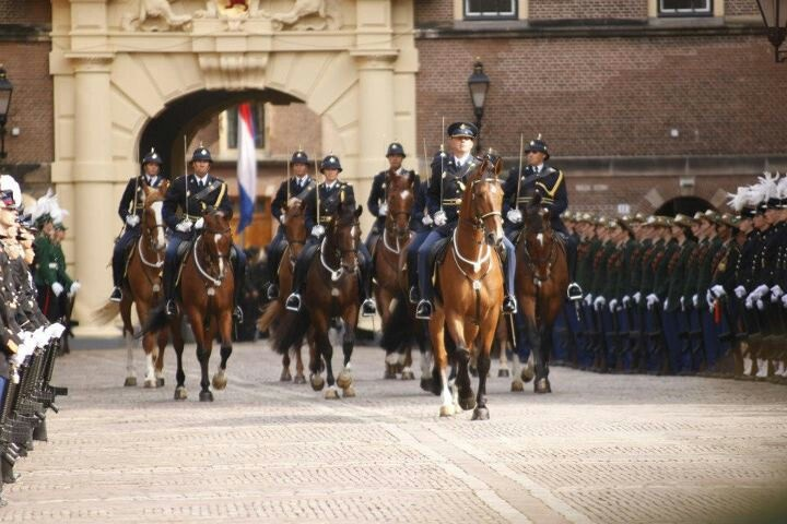 Dutch mounted police
