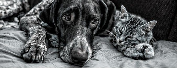 Is it possible that my dog or cat suffers from allergies and how would I know? Read this article from ePETstore to find out...